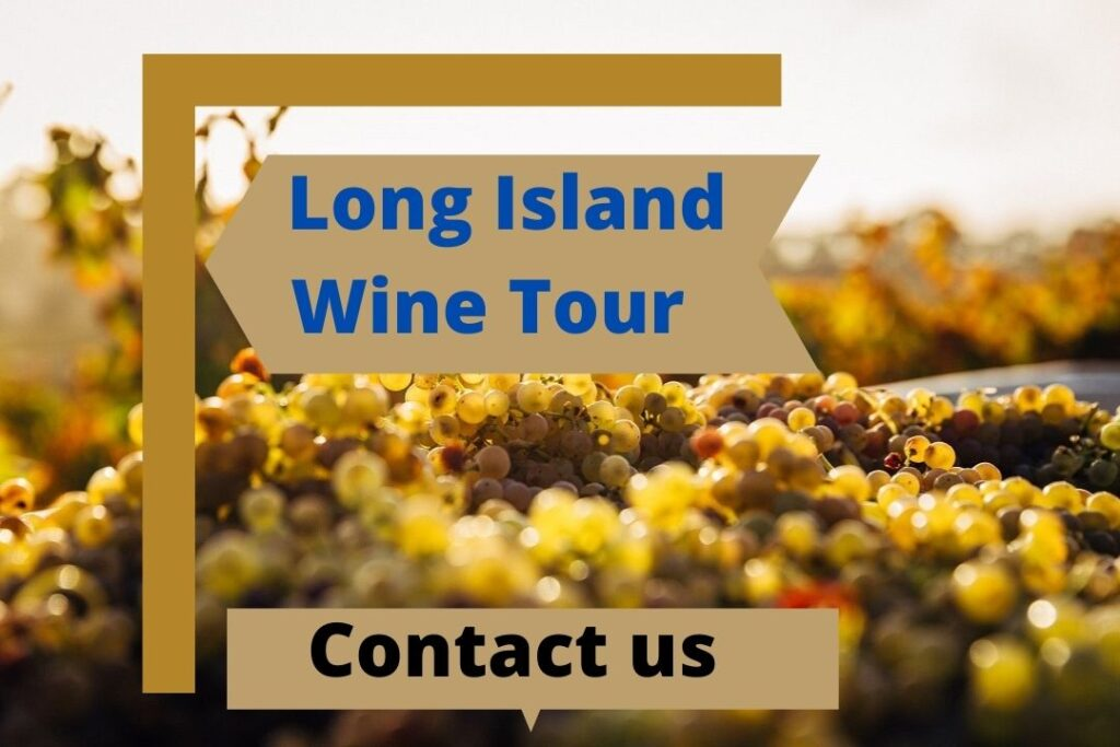 Long Island Wine Tour
